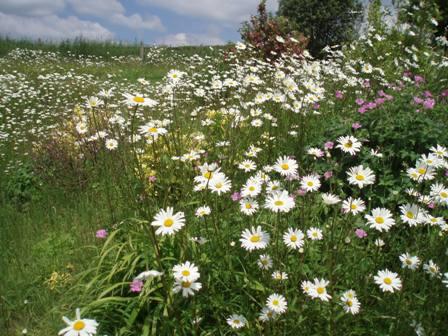 Laissez-Faire Gardening..