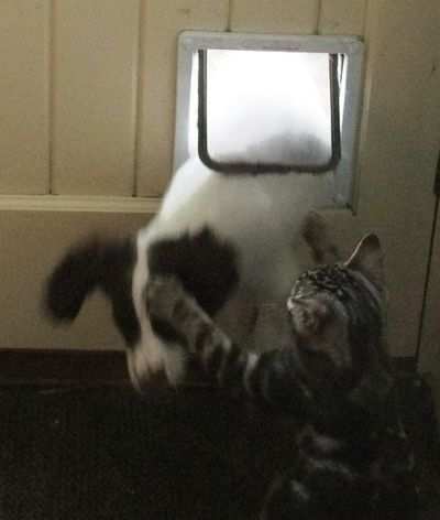 Nell and magnus and the catflap