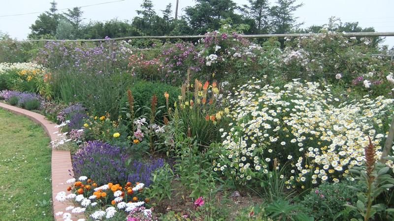 Cheristow Lavender Farm , gardens