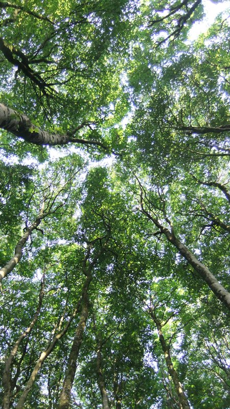 Btb july woods + canopy