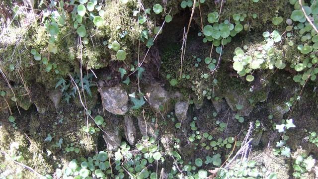 Btb holloway stones