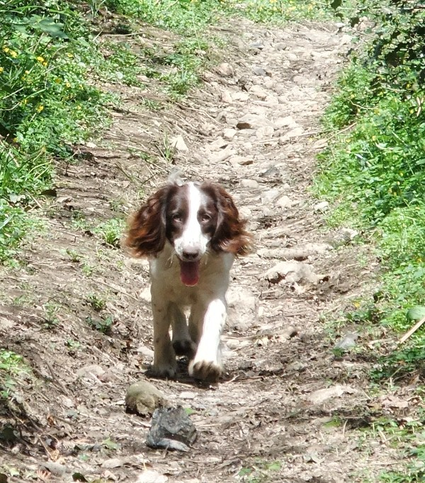 Nell walking
