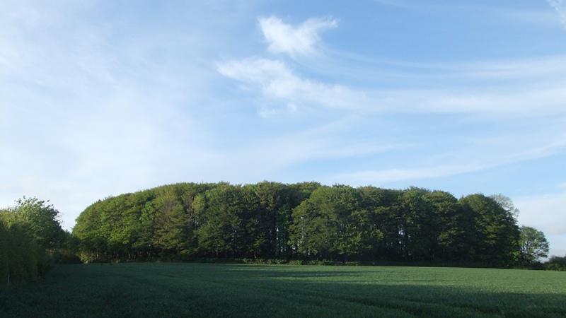 Btb woods may