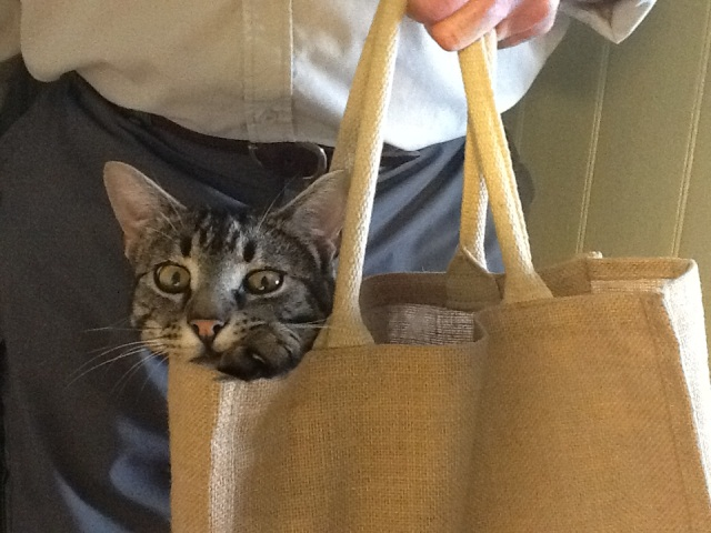 Magnus and the library bag