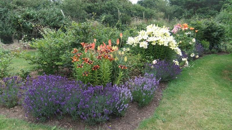 Cheristow Lavender Farm, gardens