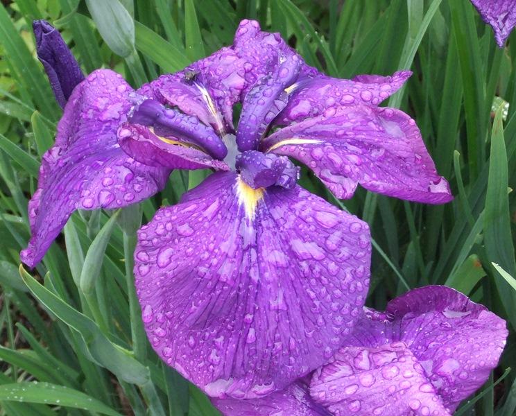 W kw iris 4