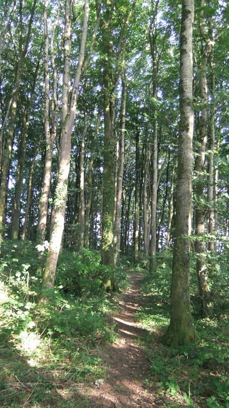 Btb woods july