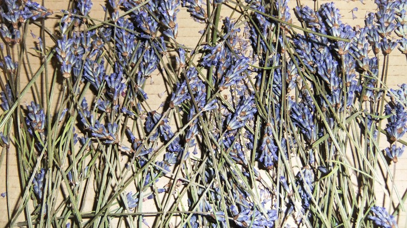 Lavender drying 2