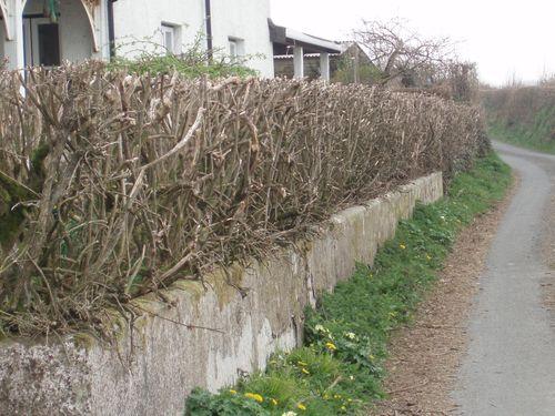 Hedge fail