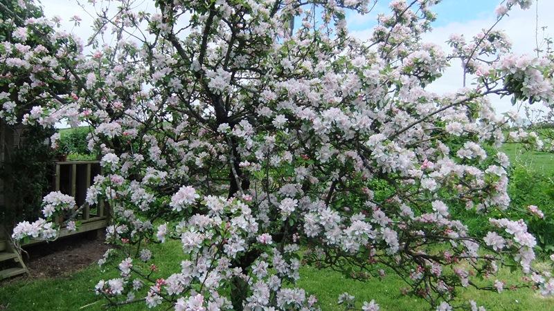 Garden may 1