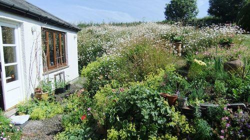 Book Room garden
