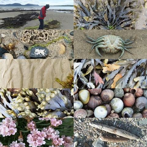 Orkney beachcombing...