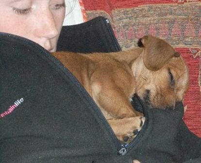 Todd sleeps