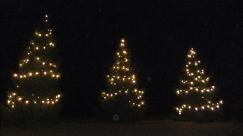 Killerton Christmas