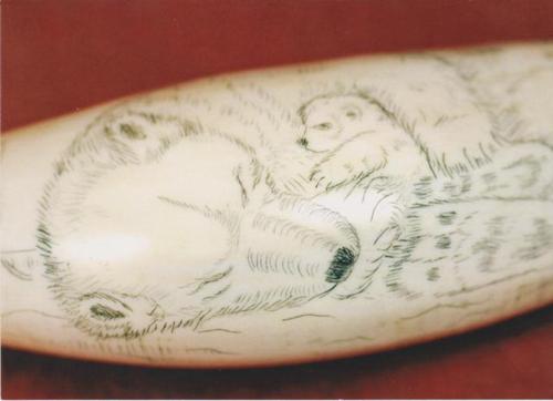 The Stromness Museum Polar Bear Scrimshaw