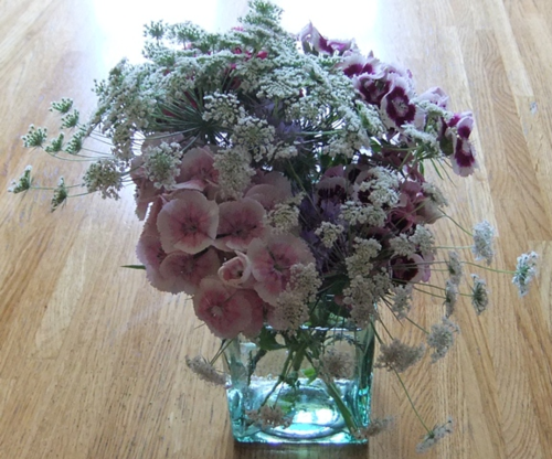 Sweet William & Ammi Majus
