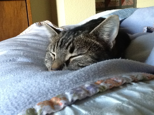 Magnus in hibernation