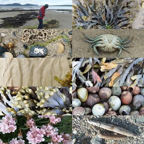 Orkney beachcombing ...