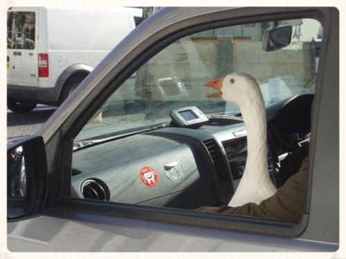 Goose fair goose