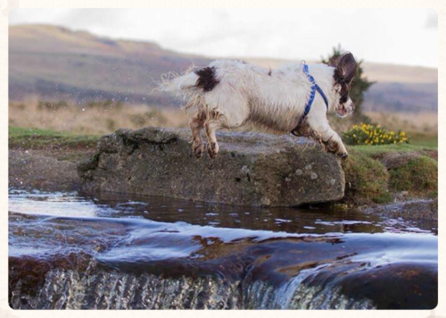 Nell Leaping the Leat  © Tommy Hatwell