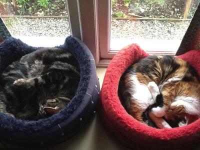 Muffy & Magnus