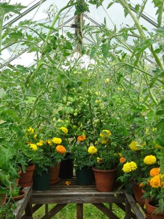 July 16 wild greenhouse
