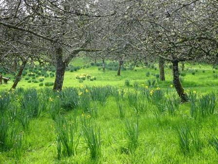 Mar 17 cotehele orchard