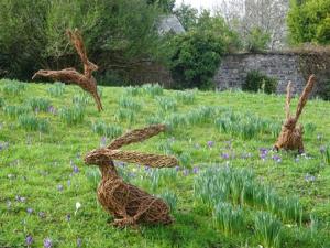 Mar 17 hares 2