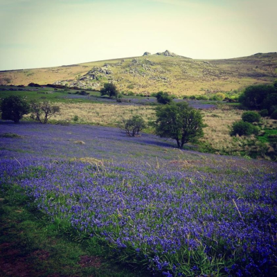 May 17 Holwell Lawn  Dartmoor