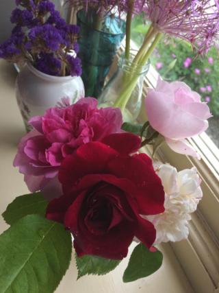 June 17 roses