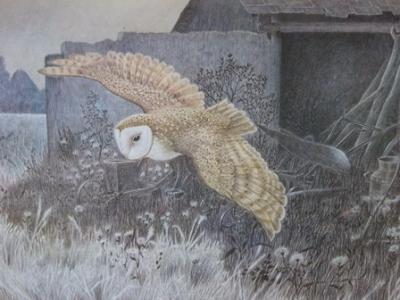 Owl ~ Brian Carter