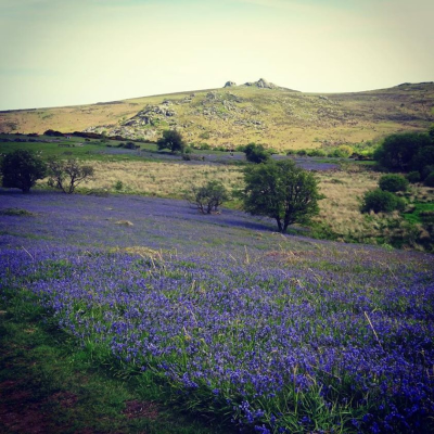 Bluebells, Holwell Lawn  Dartmoor