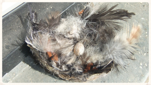 Swallow's nest 2014