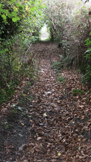 Berry Lane
