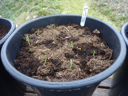 Mar 16 greenhouse