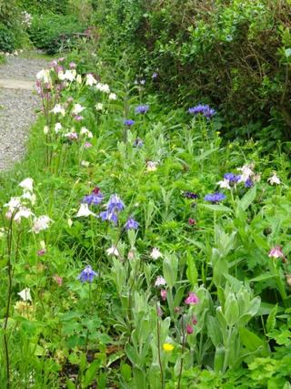May 16 garden