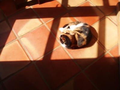 Muffy sun-puddling