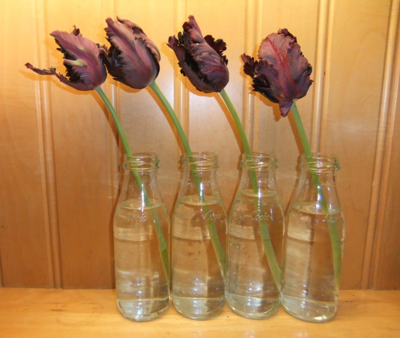 Pleasing tulips..