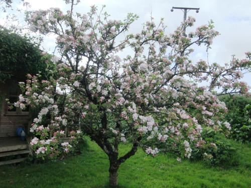Pleasing apple tree
