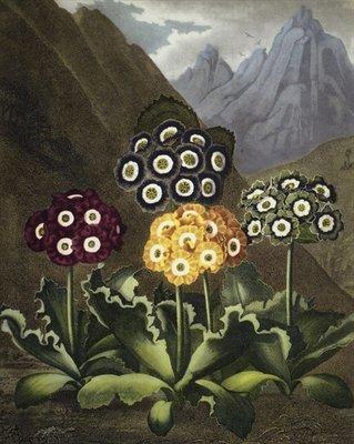 DR JOHN ROBERT THORNTON'S 'TEMPLE OF FLORA, OR GARDEN OF THE BOTANIST, POET, PAINTER AND PHILOSOPHER', LONDON, 1812