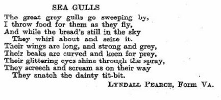 Sea Gulls by Lyndall Pearce