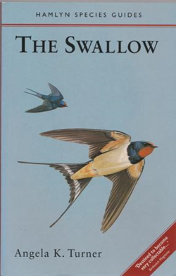 The swallow ~ Angela Turner
