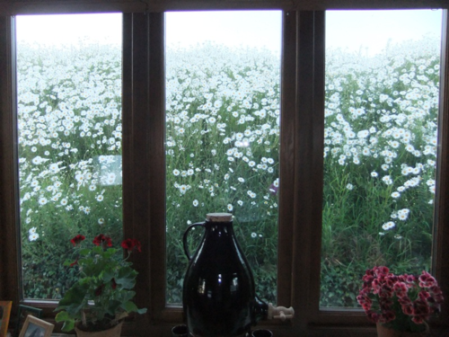 The daisy window