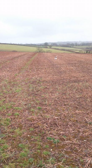 Feb 16 Nell running off the lard...