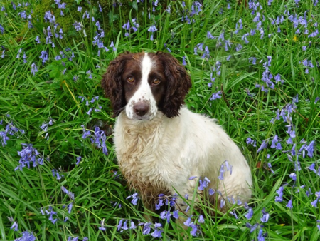 Bluebell Nell