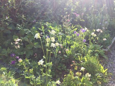 May 16 garden flowers 3