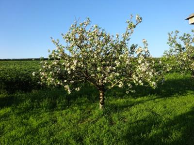 May 16 orchard