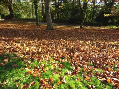 Leaves at Cotehele