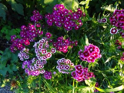 June garden sw