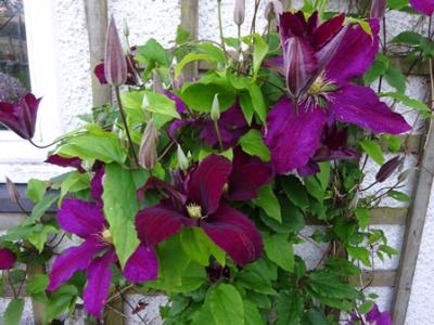 June garden niobe